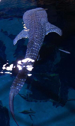 12_08 ga aquarium shark from above
