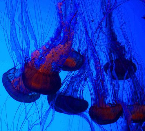 12_08 ga aquarium jellyfish 2