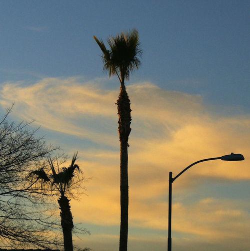 01_09 palm at sunset dark thumb