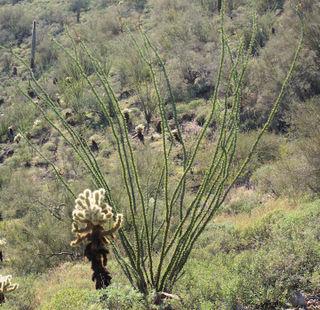 02_09 cave creek 2 cactus