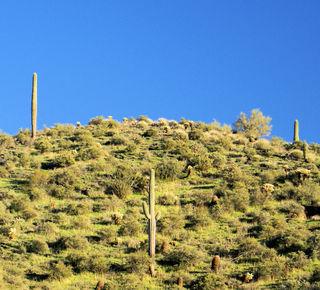 02_09 cactus sentinels