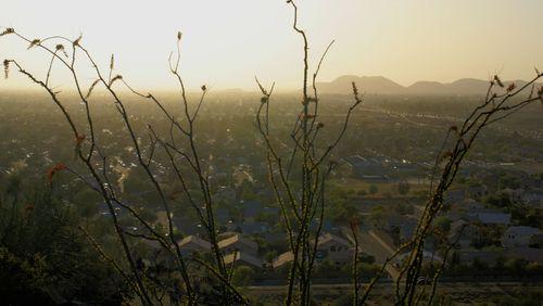 03_09 view thru a cactus