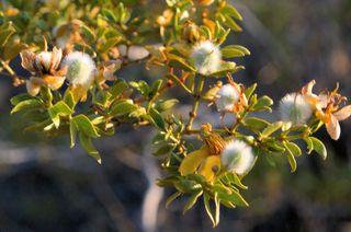 04_09 thumb white flower closeup