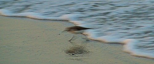 05_09 thumb treasure island racing to beat the tide