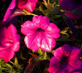 09_09 plastic flowers