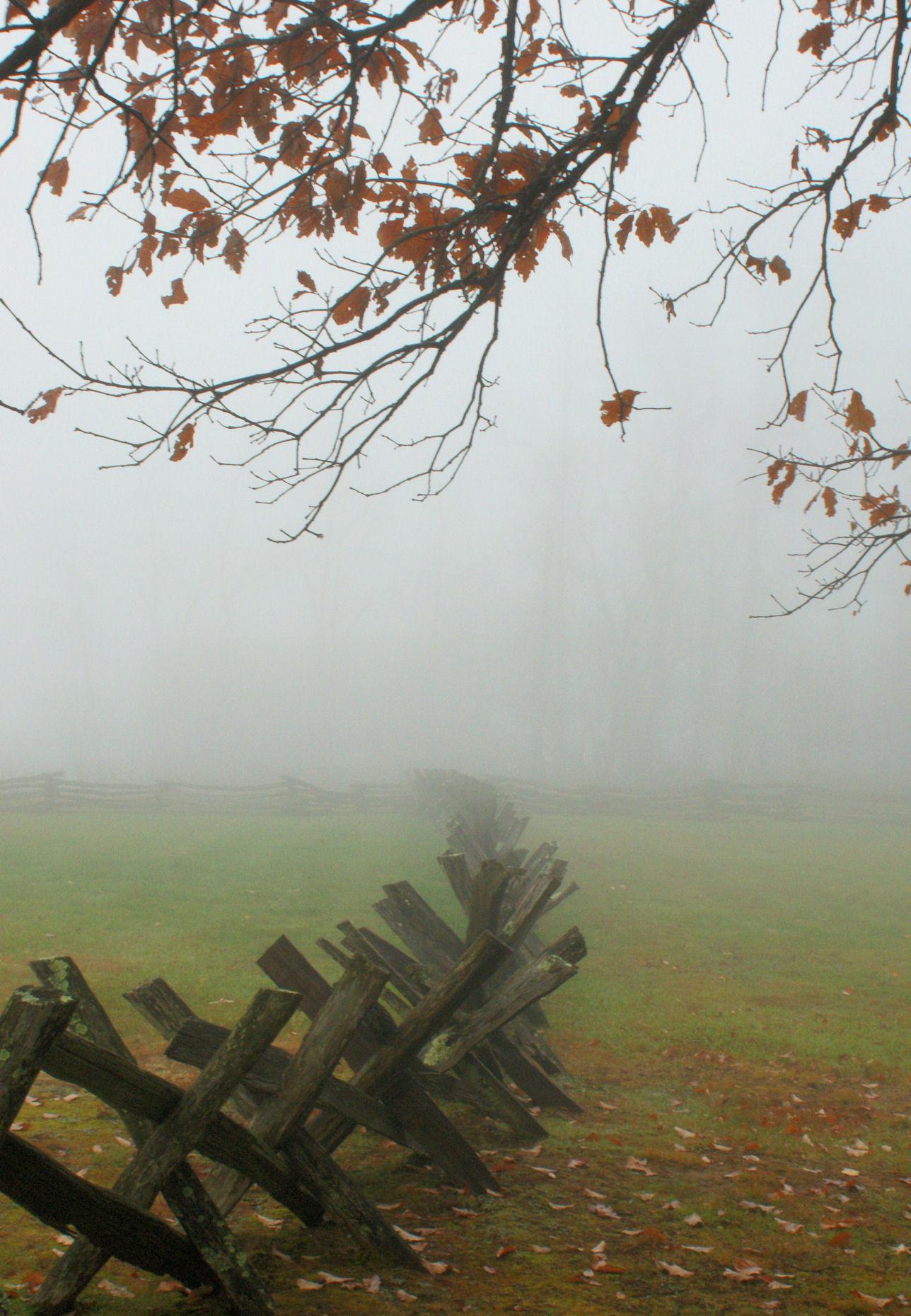 10_09 thumb fences in the fog