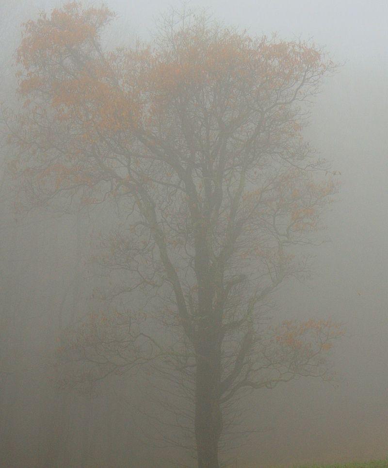 10_09 thumb tree in fog 2