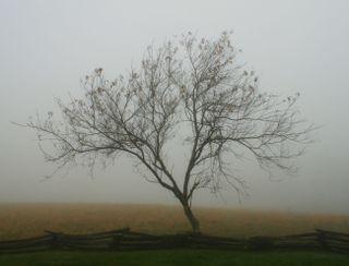 10_09 thumb tree in fog