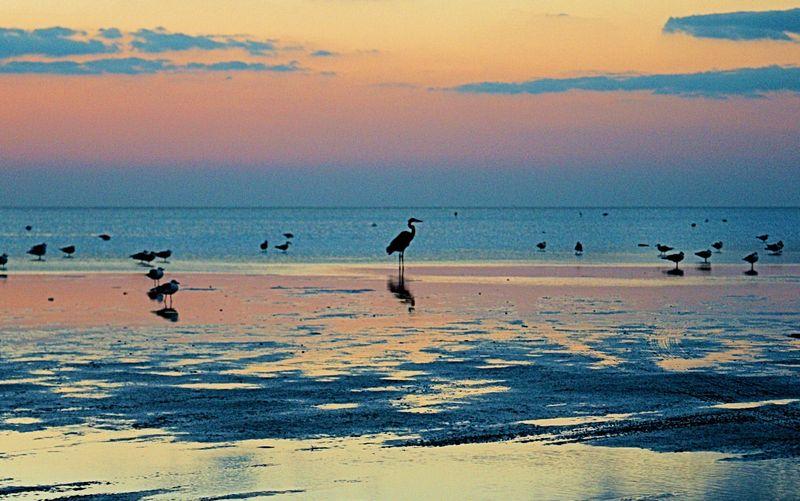 10_10 thumb s padre island sunset