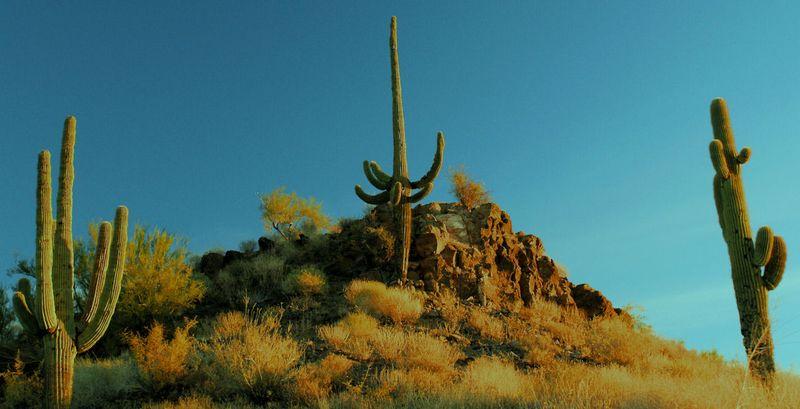 11_10 thumb cactus sunrise