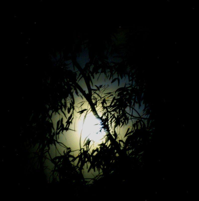 03_11 thumb moon in trees
