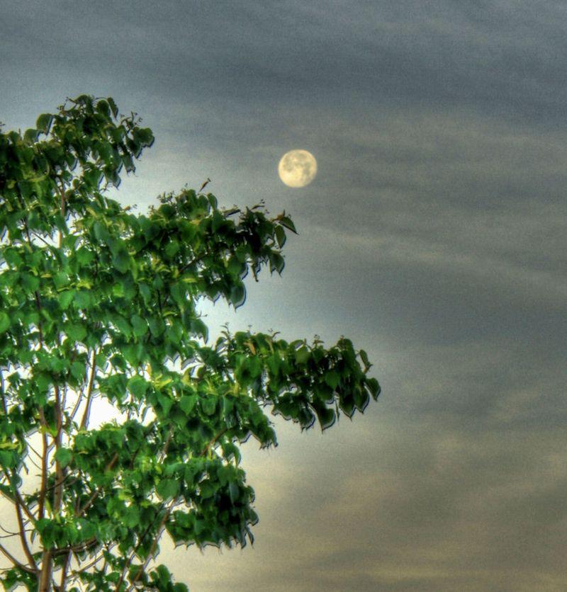 06_11 thumb il morning moon DSC02356_7_8_tonemapped