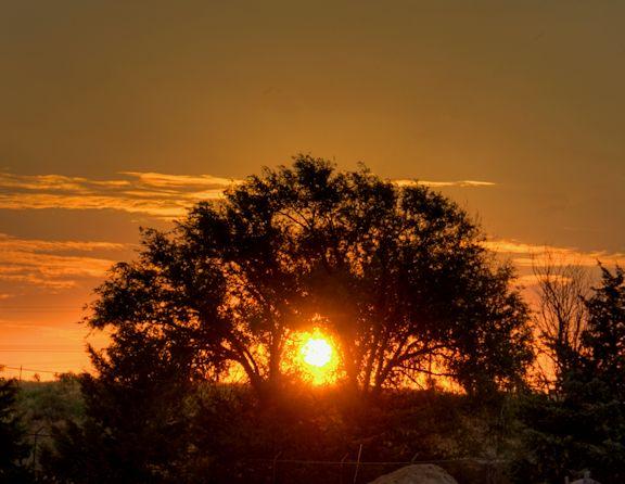 06_12 thumb sunrise through tree DSC05925_6_7_tonemapped