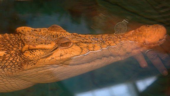08_12 thumb croc DSC06096 -1