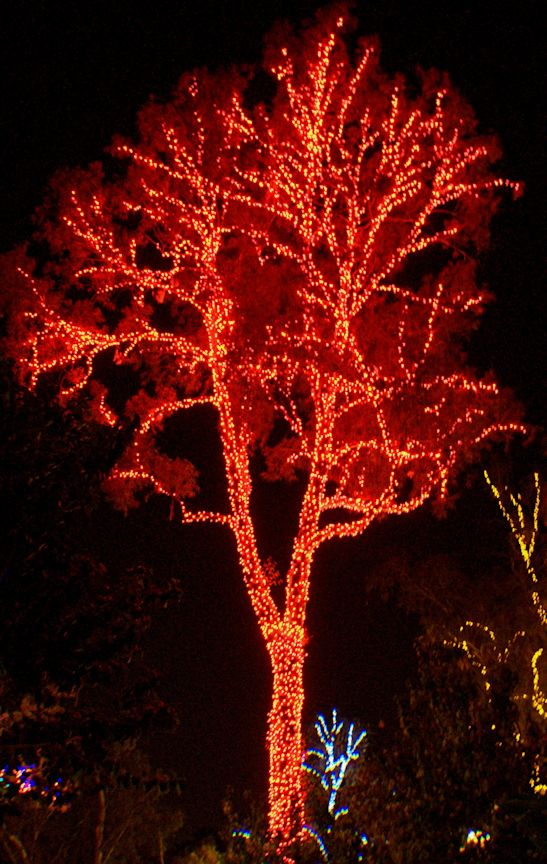 12_12 thumb multi colored tree DSC07389 -1