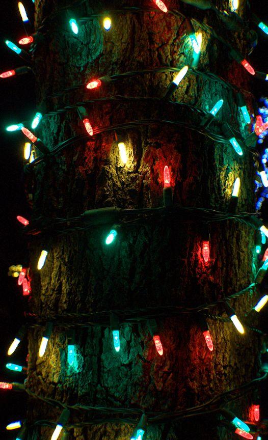 12_12 thumb lightd and bark DSC07338 -1