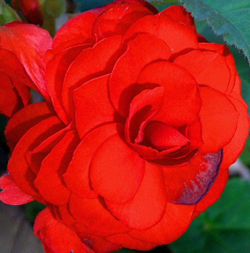 09_12 thumb red flower DSC06548 -1