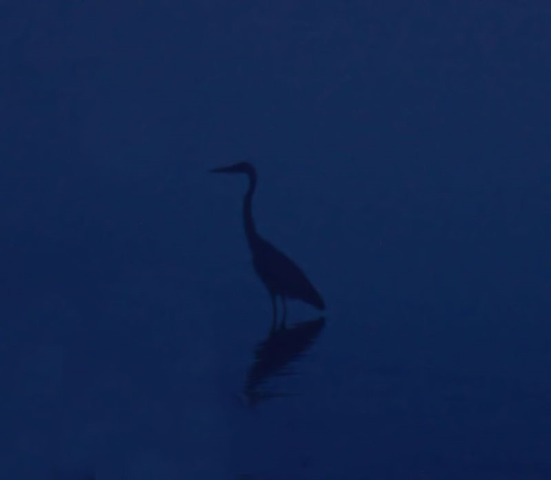 07_15 bird DSC02083 -1