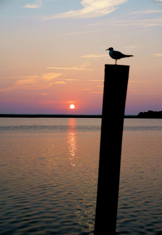 08_18 apalacha sunrise dock DSC02046