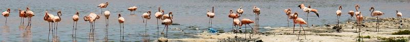 05_19 cruise pink flamingos DSC03745