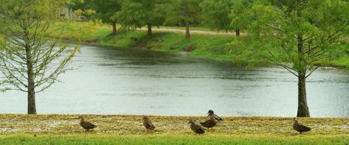 09_20 ducks 7 DSC05563