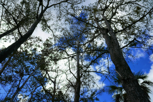 11_20 swamp sky DSC06174