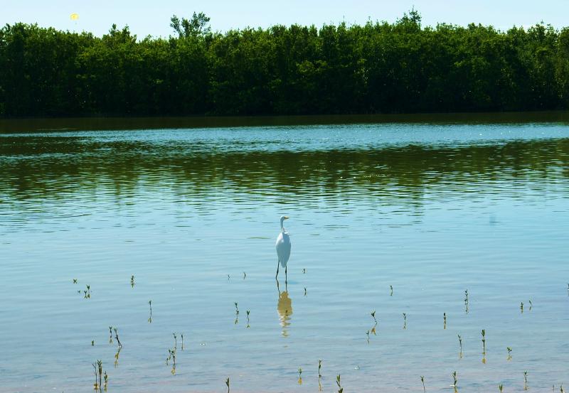 11_20 marco island bird on beach DSC06109
