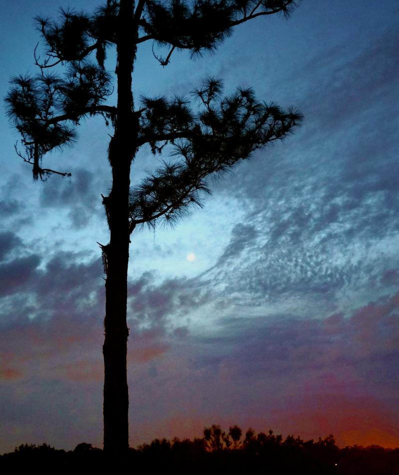 02_21 patio view DSC06249