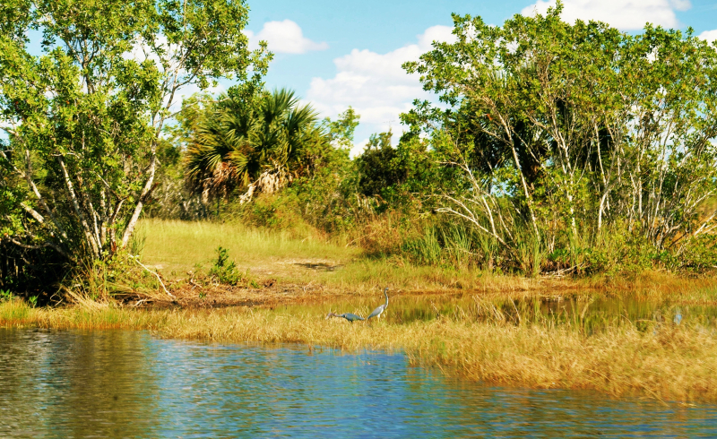 11_20 birds in swamp DSC06159
