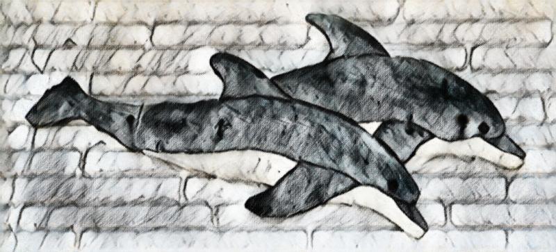 03_21 dolphins DSC06361 pencil sketch