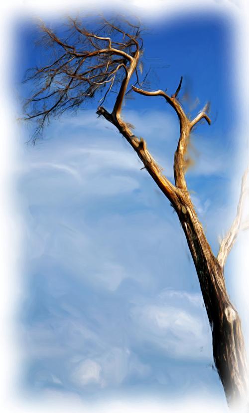05_21 st augustine tree DSC06569 oil