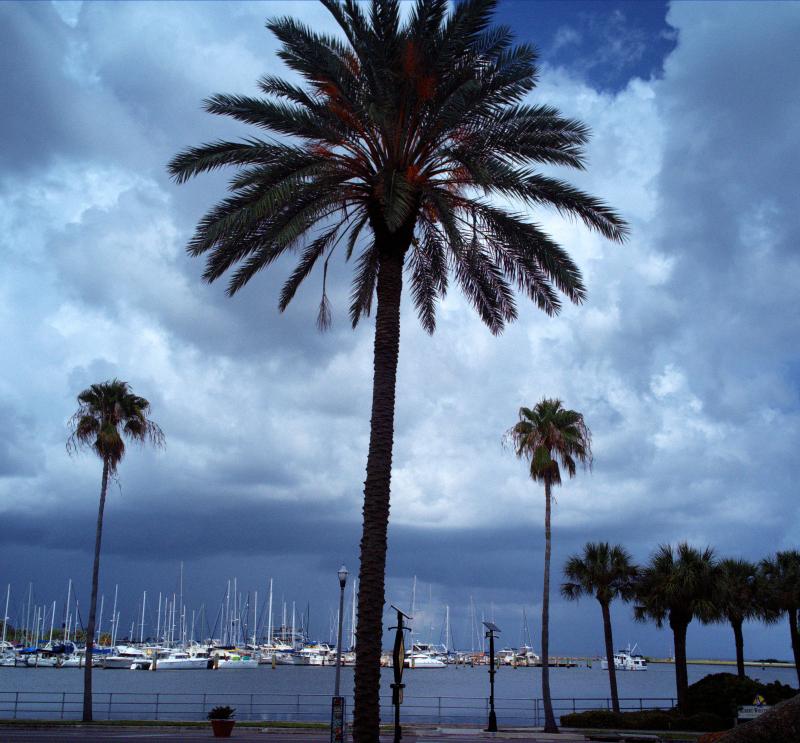09_21 st pete harbor- dali DXO_0616 -1