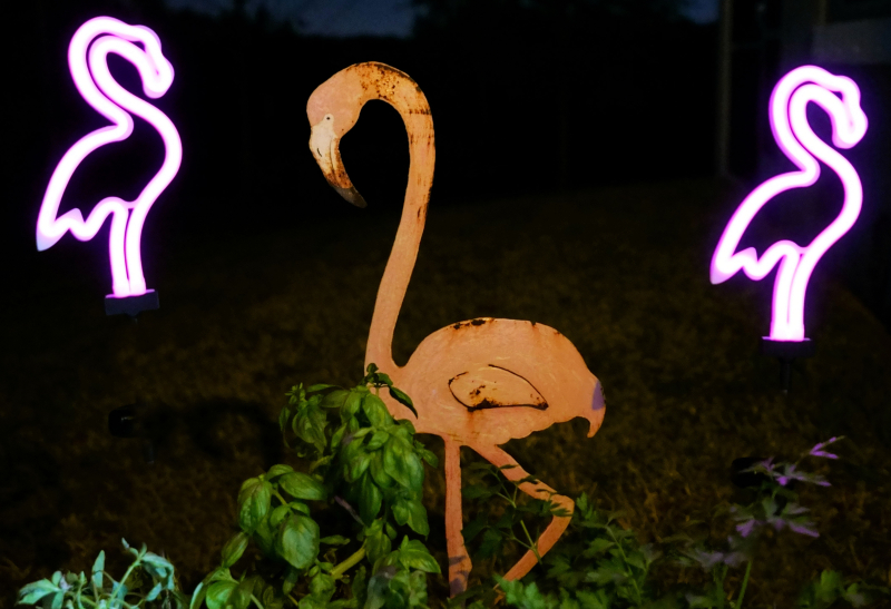 01_21 flamingos at night DSC06229