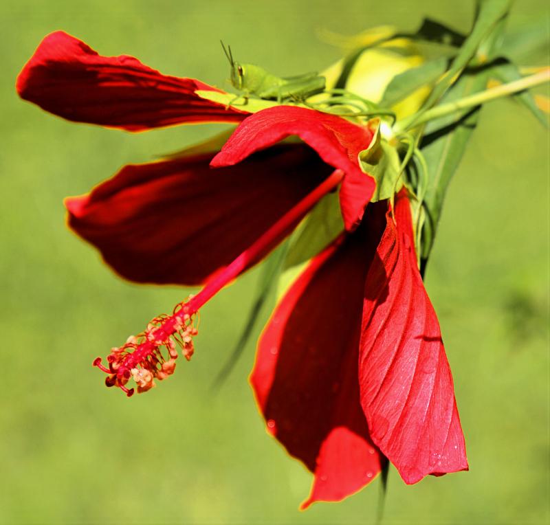 06_21 apalach flower rider DSC06789 -1